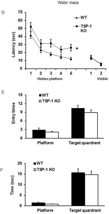 Thrombospondin-1 Gene Deficiency Worsens the Neurological