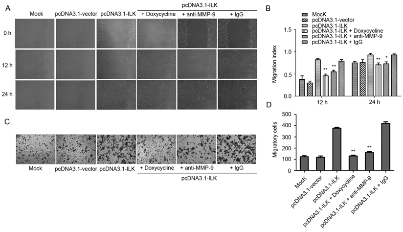doxycycline prion.jpg