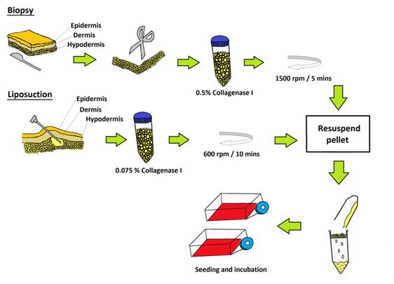 stem cell culture techniques pdf