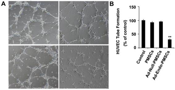 Suppression Of Peritoneal Tumorigenesis By Placenta