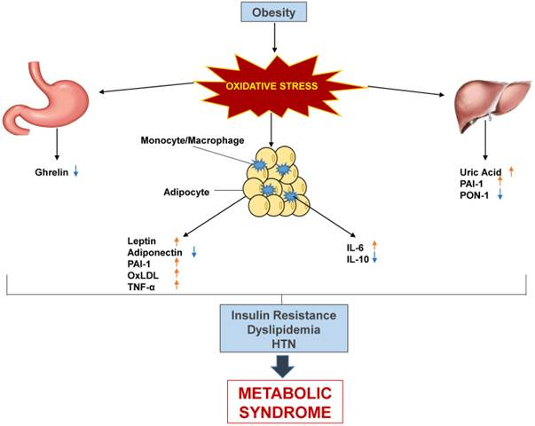 Systematic Review Of Metabolic Syndrome Biomarkers A Panel For Early Detection Management And Risk Stratification In The West Virginian Population