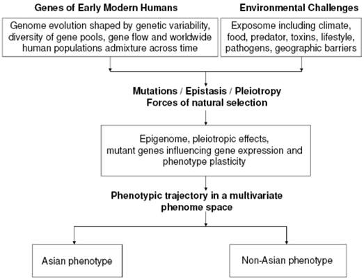 Characterization of the Asian Phenotype - An Emerging Paradigm with
