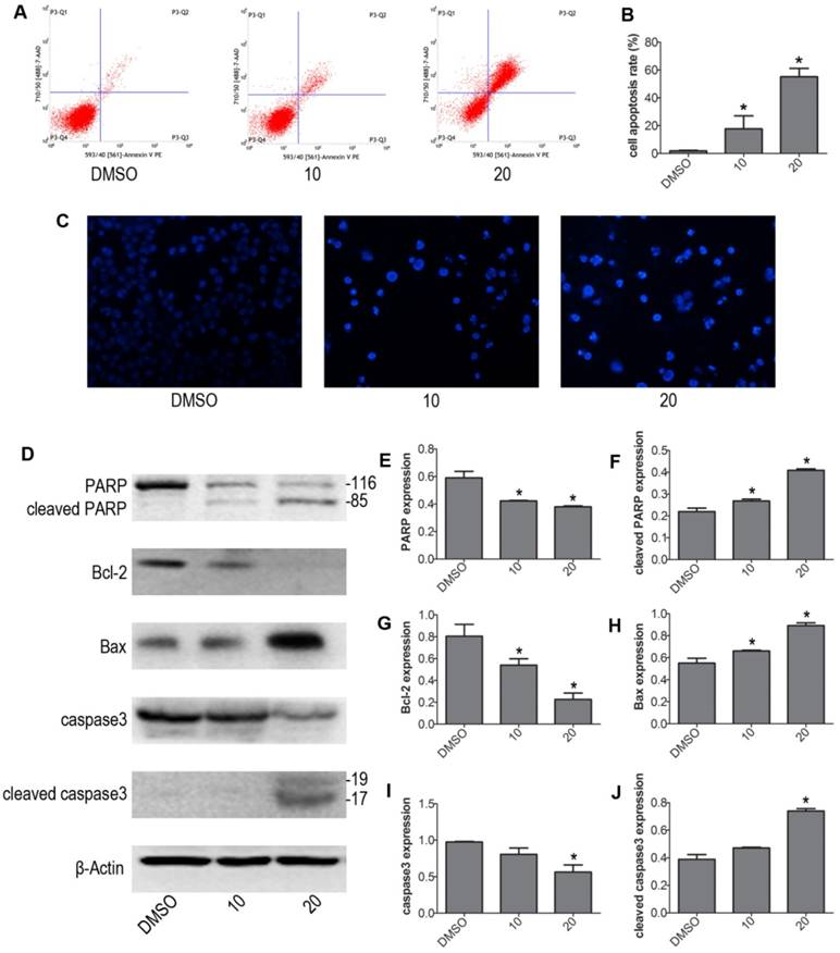 GZD824 inhibits proliferation and induces apoptosis and G0