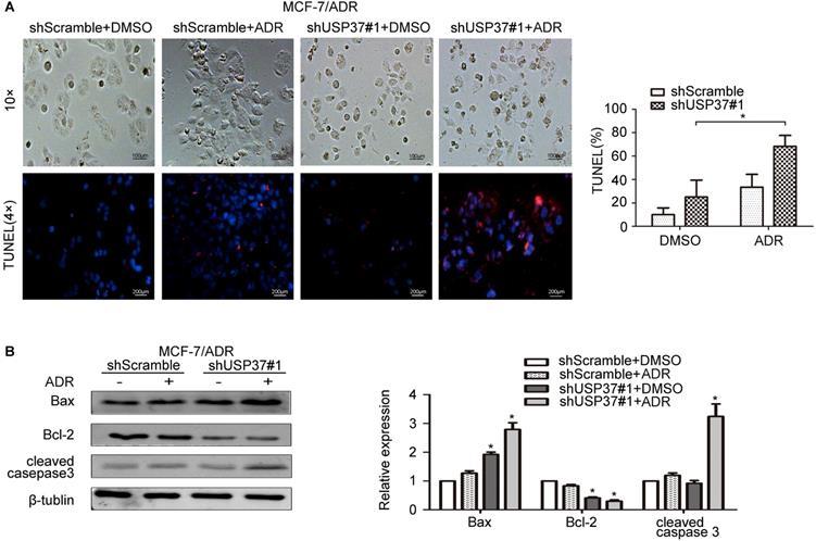 USP37 downregulation elevates the Chemical Sensitivity of